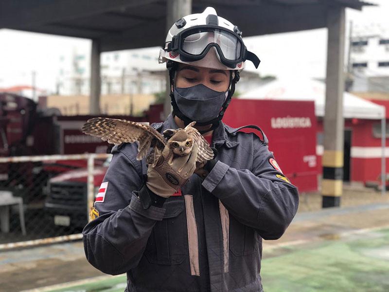 Bombeiros resgatam coruja em residência na cidade de Jequié