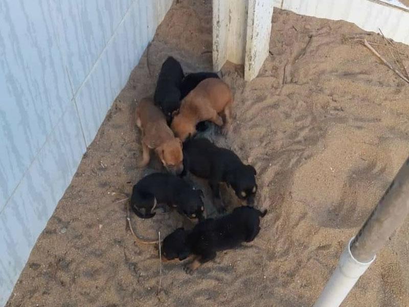 Animais abandonados são resgatados pela Polícia em Cruz das Almas