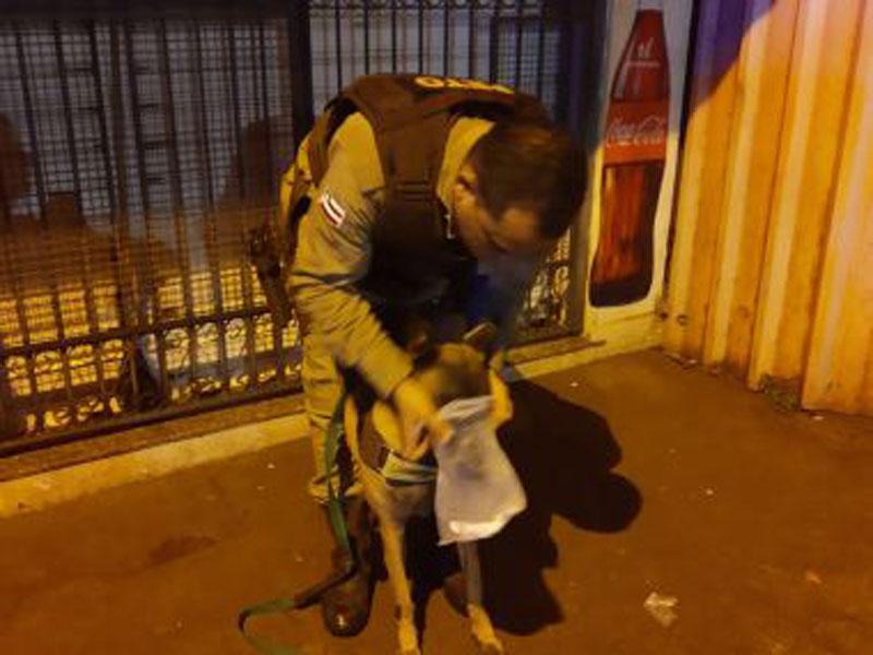 Policiais localizam acusado de homicídio em Valença com ajuda de cadela treinada