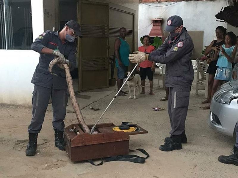 Jiboia aparece em residência e é resgatada por bombeiros em Barreiras