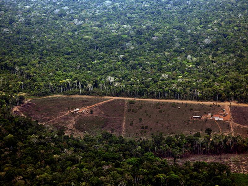 Área da Amazônia com alerta de desmatamento sobe 278% em julho, comparada ao mesmo mês de 2018
