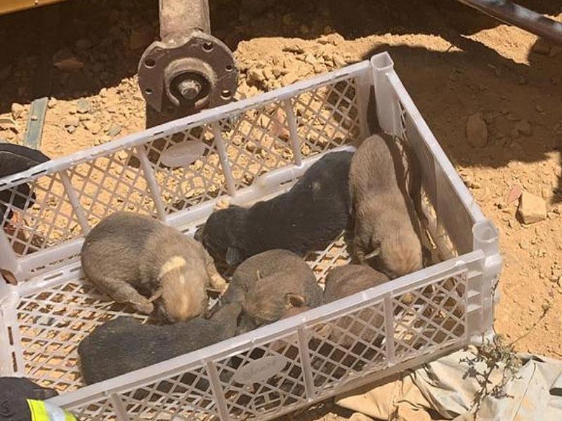 Cadela dá à luz embaixo de contêiner e é resgatada com filhotes por bombeiros do 17º Grupamento em Barreiras