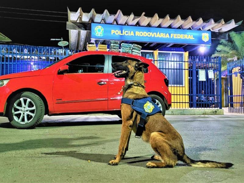 PRF na Bahia recebe cadela K9 Ruth para auxiliar nas ações de combate à criminalidade no estado
