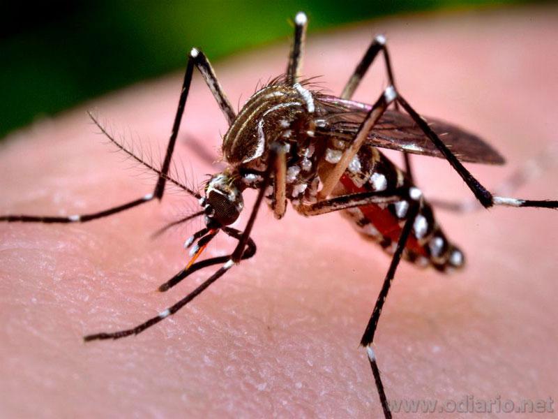 Bahia tem mais de 40 mil casos de dengue no 1º semestre de 2019; número é 7 vezes maior que mesmo período de 2018
