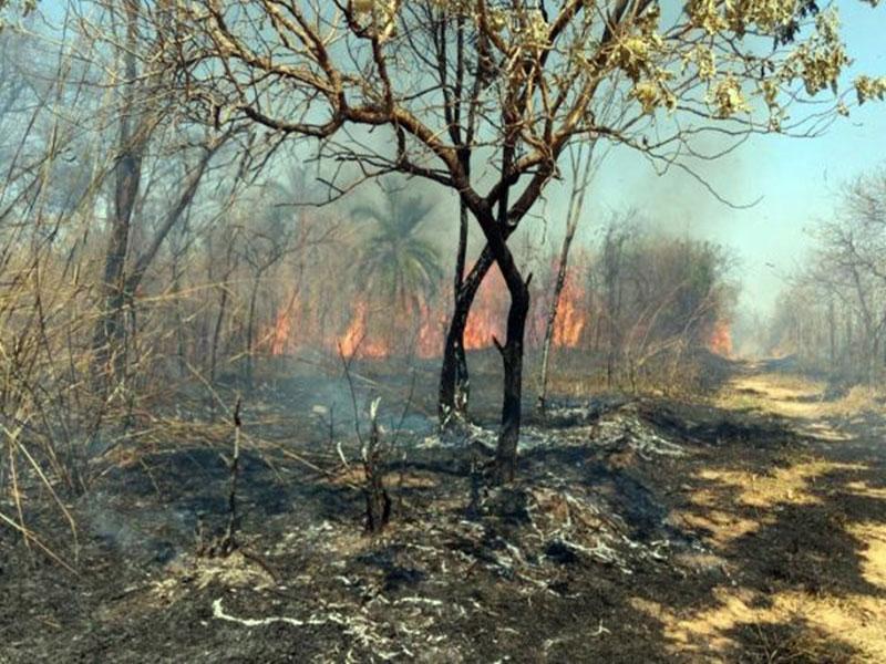 Três municípios receberão brigadistas para prevenir e combater incêndios florestais