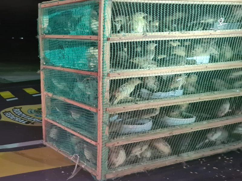 PRF resgata mais de 1.000 pássaros silvestres na BR 116 em Jequié