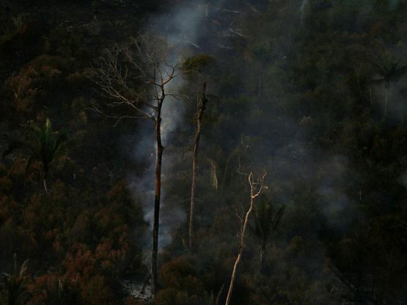 Multas na Amazônia somam R$ 36 milhões