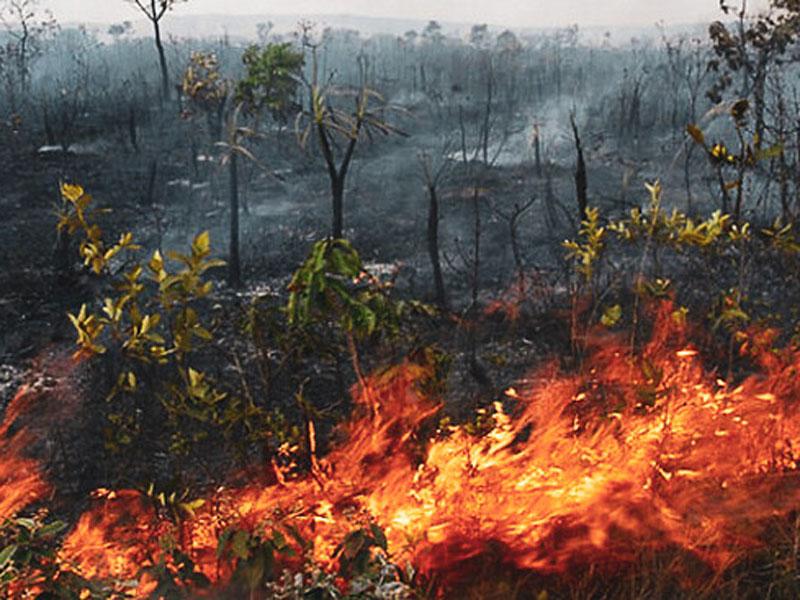 Ministro do Meio Ambiente nega omissão em relação à Amazônia e culpa tempo seco por aumento de queimadas