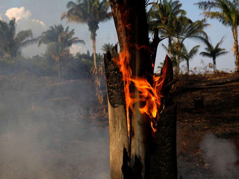 Fumaça de incêndios criminosos na Amazônia se espalha por todo o continente