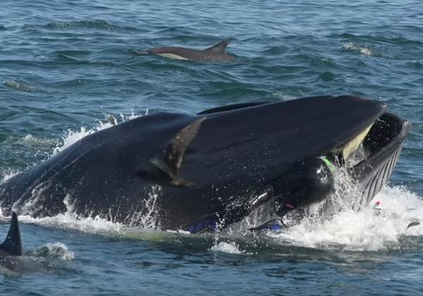 Mergulhador de 51 anos sobrevive após ser engolido por baleia