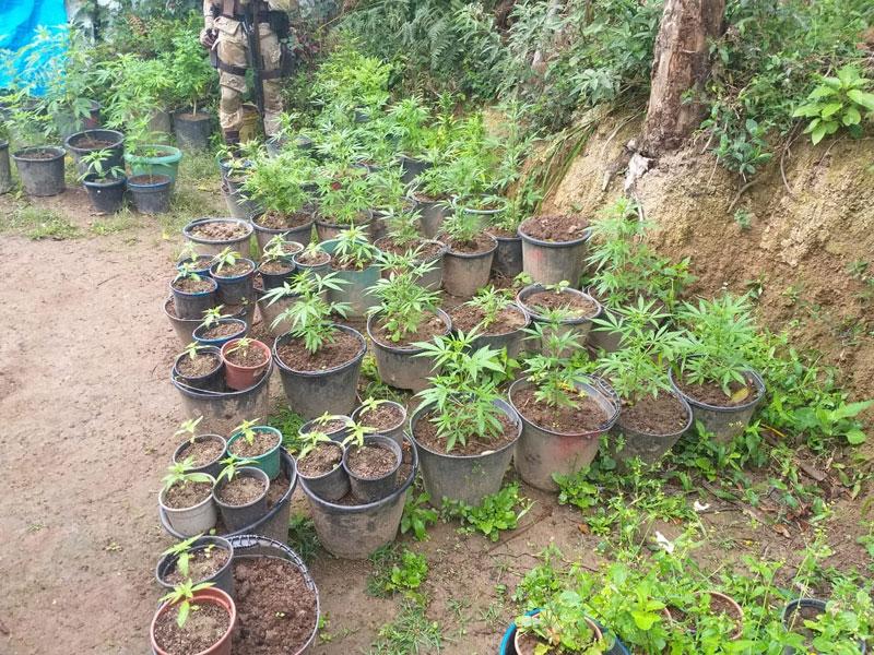 Chapada Diamantina: Plantações ilegais são descobertas no Vale do Capão