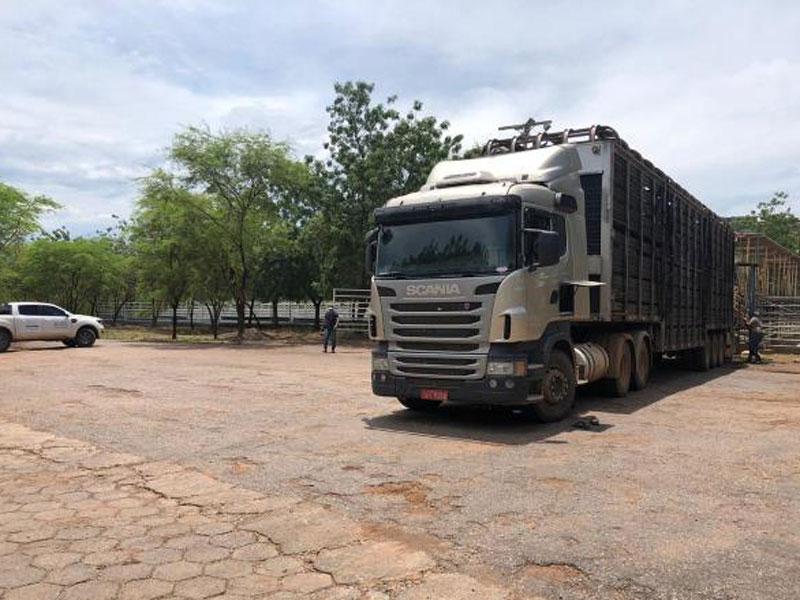 FPI apreende carreta com 60 animais sem documentação sanitária em Luís Eduardo Magalhães