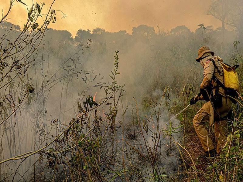 Incêndios no Pantanal: comissão visita Mato Grosso neste sábado