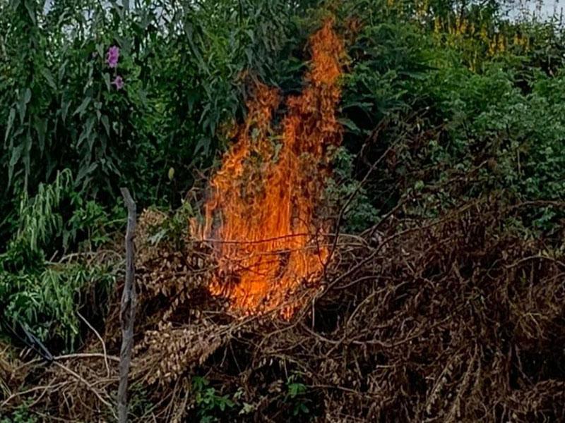 PM destrói plantação que renderia 148 toneladas de maconha na Bahia