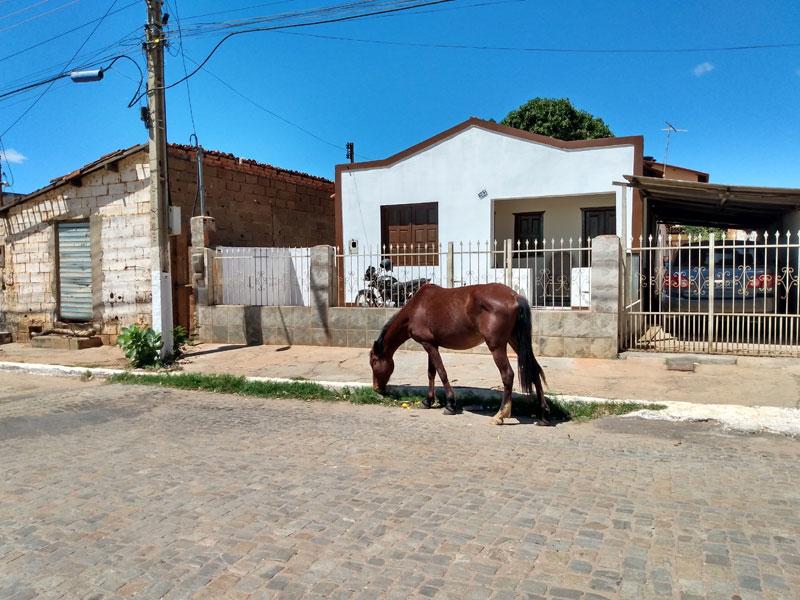 Cavalo solto na cidade e Caçamba transportando terra sem nenhuma cobertura são flagrados em Livramento