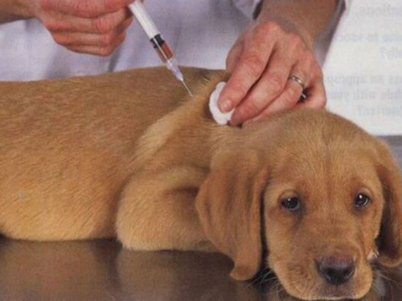 Livramento: Secretaria de Saúde realiza nesta quarta-feira (09) vacinação antirrábica para cães e gatos
