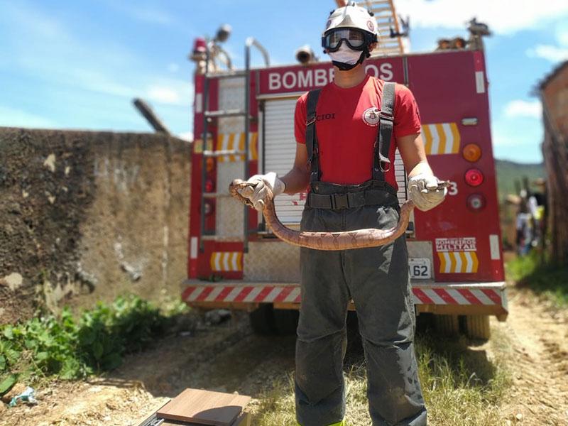 Bombeiros resgatam jiboia de via pública em Barreiras