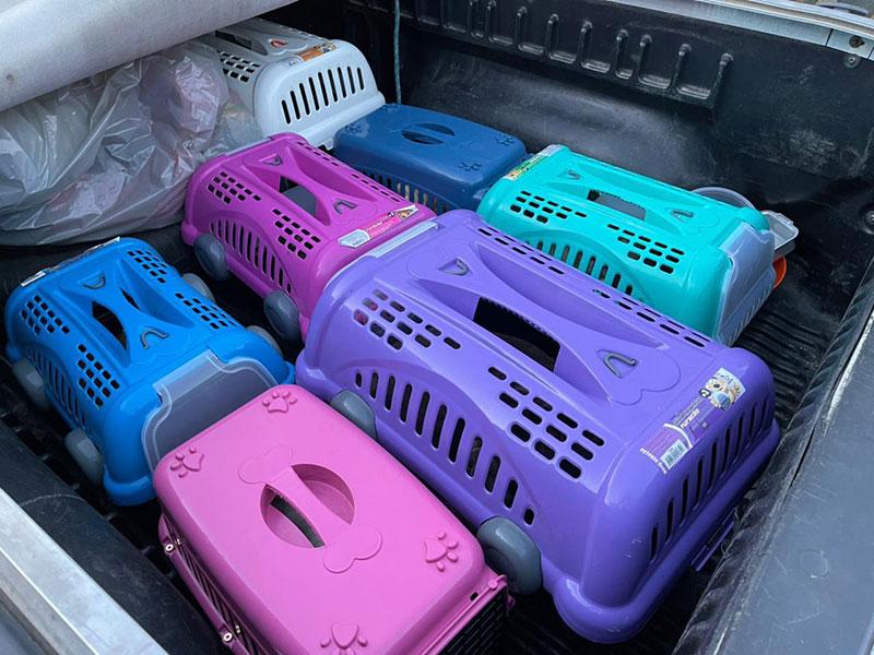 Mais de 45 cachorros em situação de maus  tratos são resgatados em Conquista
