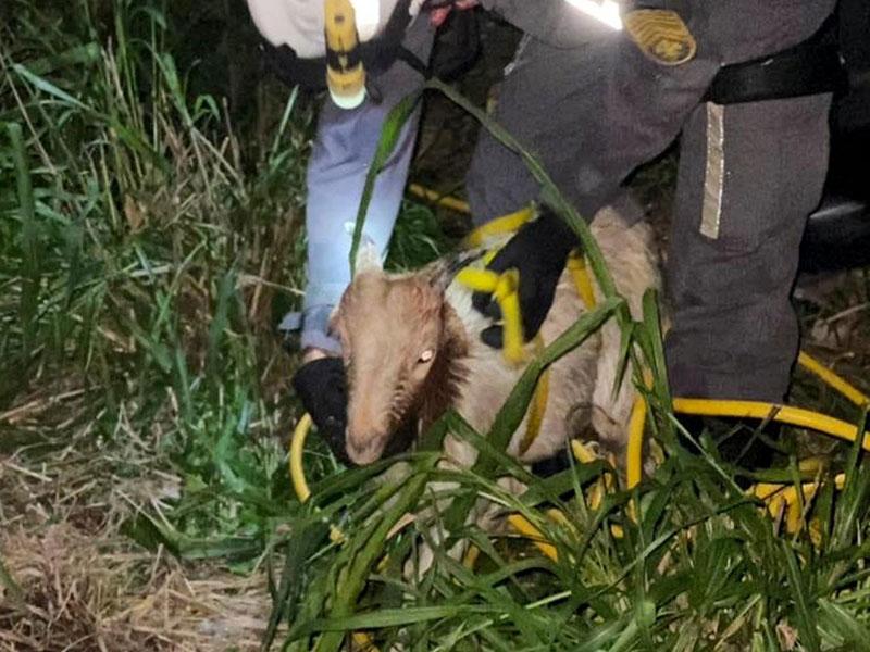 São Gonçalo dos Campos: Bombeiros resgatam bode que caiu em cisterna de 20 metros de profundidade