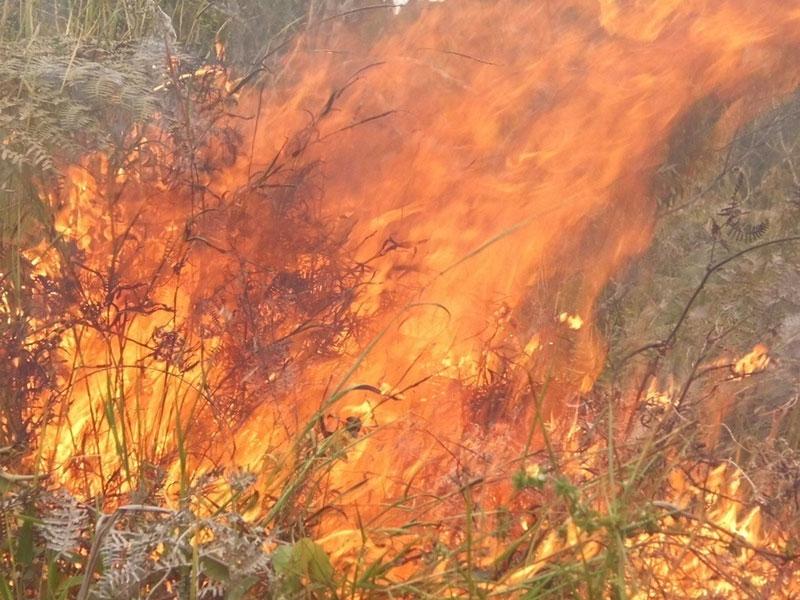 Incêndio que atingiu vegetação em Brejões é debelado
